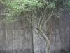 blank-wall-2